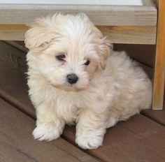 So cute, looks like Herbie!!!
