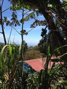 Sugar Cane in Costa Rica (8th Grade Trip)