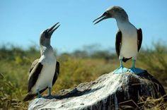 Galápagos-Inseln: Abschied vom einsamen George - SPIEGEL ONLINE - Nachrichten - Reise