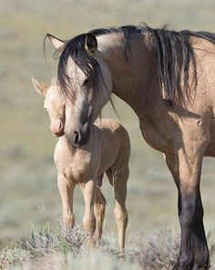 mare and foal