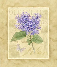 D04-lilac calligraphy