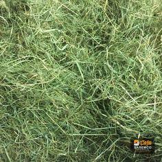 #AlfalfaHay #Hay #eTradePakistan  #Animalfeed #feed #wholesaleanimalfeed  #WholesaleAlfalfahay Alfalfa Hay, Herbs, Content, Herb, Medicinal Plants