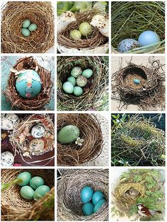 flickr favs :: nests & eggs by bailiwickdesigns, via Flickr