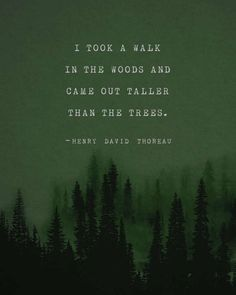Quotes Discover Henry David Thoreau quote poster I took a walk in the woods mens art trees poster gifts for him Henry David Thoreau, Into The Woods Quotes, Walk In The Woods, Life Quotes Love, Quotes To Live By, Quotes To Myself, Man Quotes, Music Quotes, Thoreau Quotes