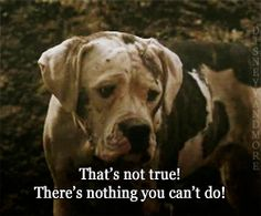 Homeward Bound taught us that even when things seem hopeless…   25 Movies From The '90s That Taught Us Life's Most Important Lessons