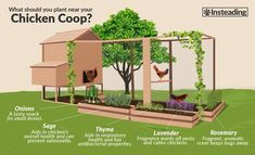 chicken coop designs Dogs is part of Diy Chicken Coop Plans Ideas That Are Morningchores - what to plant near your chicken coop Chicken Garden, Backyard Chicken Coops, Backyard Farming, Chickens Backyard, Plants For Chickens, Small Chicken Coops, Simple Chicken Coop, The Farm, Mini Farm