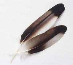 Google Image Result for http://resonanttruth.com/wp-content/uploads/2010/03/eagle-feather.jpg