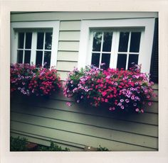 Beautiful Flower Box.  I want one in our big front window at the front of the house.