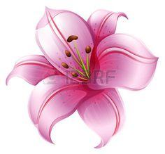 dessin fleur lys: Illustration d'une fleur de lys rose sur un fond blanc