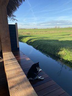 Ziet je uzelf al zitten op je nieuwe terras van bankirai hout? Je drinkt op een zonnige dag een kop koffie of leest een boek op een loungestoel op je gloednieuwe vlonder. Af en toe kijkt je even op. Het kijken naar de natuurlijke vormen van je vlonder van Bankirai hardhouten planken verveelt nooit, elke plank is uniek. Dat is puur genieten. #vlonder #bankirai River, Outdoor, Outdoors, Outdoor Games, The Great Outdoors, Rivers