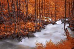 Autumn 4 / Sinan Cansız