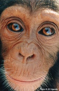 monkey face...
