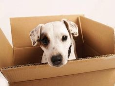 Here are some the #best #moving #tips for those who are moving or thinking of moving: http://www.ssmovers.com/moving/moving-tips.php #movingout #movingin #smart #advice #professional #movers