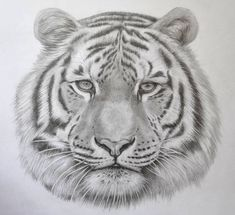 Realistic Tiger Drawing in Pencil by JSHarts on deviantART #Art #AnimalArt #Tiger
