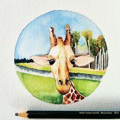 Miniature Giraffe Watercolor by Julie Healy Reade
