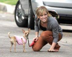Hillary Duff avec son mini chihuahua !
