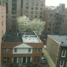 Trees blooming. Springtime in the Bronx.