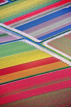 Keukenhof, localizado em Lisse, a cerca de 30 quilômetros de Amsterdã tem 32 ha de flores e mais de 7 milhões de bulbos em flor e 800 variedades de tulipas. Hollande