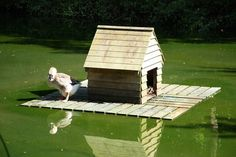 duck houses on ponds | Duck House:: OS grid SO6633 :: Geograph Britain and Ireland ...
