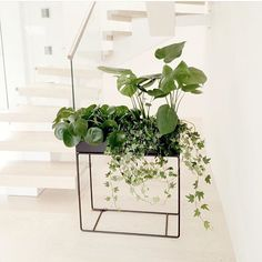 Ferm LIVING Plant Box: Black Slim Designed Storage Plant Box Will Work  Anywhere In The Home.