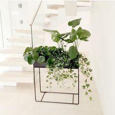ferm LIVING Plant Box: http://www.fermliving.com/webshop/shop/green-living/plant-box-black.aspx