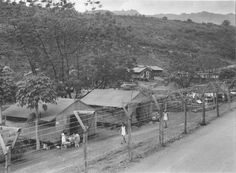 The Untold Story: Japanese-Americans' WWII Internment in Hawaii - NBC News
