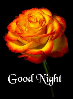 We send good night images to our friends before sleeping at night. If you are also searching for Good Night Images and Good Night Quotes. Good Night Flowers, Good Night I Love You, Good Night Prayer, Good Night Friends, Good Night Blessings, Good Night Wishes, Good Morning Good Night, Goid Night, New Good Night Images