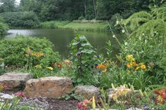 Down by the pond. Turtle Rock, Pond, Gardens, Plants, Water Pond, Planters, Tuin, Plant, Garden