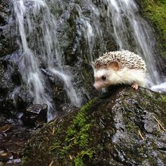 The fantastic adventures of Biddy the Hedgehog