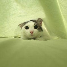 Ouzo the cat