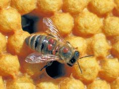 How to Control a Varroa Mite Problem.