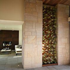 tillandsien deko ideen einrichtung vertikale gärten pflegen