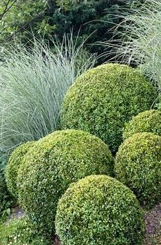 Box ball topiary to feature