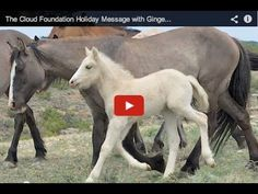 The Cloud Foundation Holiday Message with Ginger and Trace