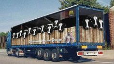 Photos of funny truck ad designs are just mind blowing. The artist behind the designs are very creative and show what creative advertising looks like Street Marketing, Guerilla Marketing, Clever Advertising, Advertising Design, Big Rig Trucks, Cool Trucks, Container Truck, Vehicle Signage, Trailers