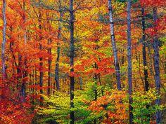 Bright-fall-foliage-autumn-in-New-Hampshire.jpg (JPEG Image, 990×743 pixels)
