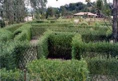 living willow maze