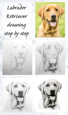 When I draw commissioned art for customers, I like to take photographs as the drawing progresses to keep my clients updated. Here are the work in progress photos from my Labrador Retriever commissi...