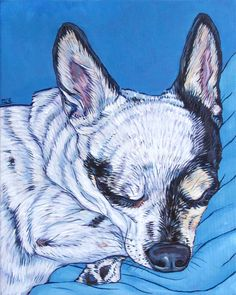 Gringo the Sleeping Chihuahua Custom Pet Portrait on 8x10 Canvas from Pet Portraits by Bethany on Etsy and www.PetPortraitsbyBethany.com