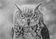 Realistic drawing tutorial - Birds / how to draw an owl time lapse Realistic Eye, Realistic Drawings, Eye Drawings, Tattoo Drawings, Tattoos, Lion Drawing, Painting & Drawing, Drawing Owls, Owl Eyes