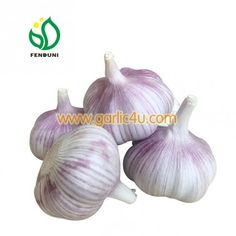 Normal White Garlic is also named Red Garlic, Purple Garlic Purple Garlic, Fresh Garlic, Red, Spices