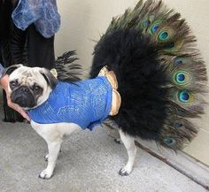 The 100 Silliest Pet Halloween Costumes Peacock....