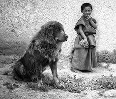 Do Khyi in der Haarung. Tibet