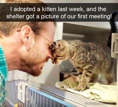 Indispensable Wholesome Animal Memes To Uplift Spirits - World's largest collection of cat memes and other animals Cute Kittens, Cats And Kittens, Cats Meowing, Baby Kittens, Orange Kittens, Ragdoll Kittens, Siamese Cats, Kitty Cats, Funny Cat Memes