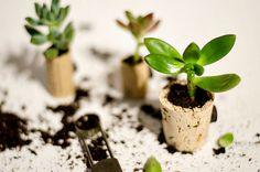 Linda from It All Started with Paint created these tiny planters from upcycled wine corks. Here's how: Gather your materials: First, drink some wine (Frenc