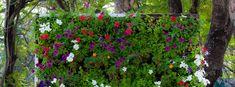 How To Create A Vertical Garden | DIY At Bunnings | Bunnings Warehouse