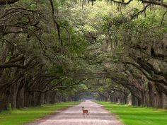 Wormsloe Plantation just near Savannah, GA. This is a MUST SEE if you are in the area ;)