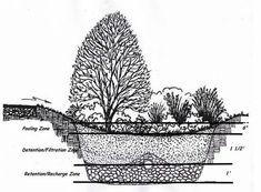 Raingarden Design by ecohusky.uconn.edu #Raingarden #Conservation #Water_Management #ecohusky_uconn_edu