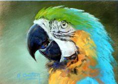 Parrot, Artworks, Creatures, Bird, Facebook, Exotic, Amigos, Animaux, Pastel