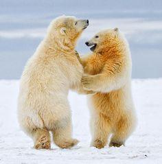 La danse des ours
